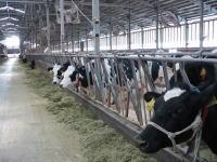 牧場 吉野 吉野牧場|農家のおしごとナビ